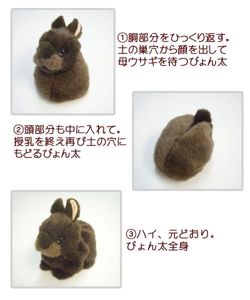 アマミノクロウサギの画像 p1_33